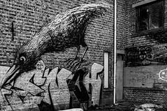 Alfred Hitchcock' friend (ericbaygon) Tags: urban black brick bird abandoned wall blackwhite nikon paint belgium belgique belgie noiretblanc decay tag dessin peinture brique antwerp hitchcock mur oiseau antwerpen urbain graffitis oubli doel corbeau anbandonn nikonpassion d300s