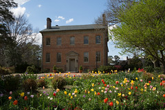 Tulips at the Alumni House (William & Mary Photos) Tags: flowers house buildings spring tulips wm williamandmary alumni grounds williammary collegeofwilliamandmary collegeofwilliammary