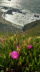 Beaches and Flowers (ChanduBandi) Tags: sanfrancisco beach landsend bayarea