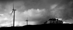 sillhoette of wind (Jamie B Ernstein) Tags: trees newzealand sky blackandwhite panorama monochrome clouds landscape nikon windmills northisland sillouette windfarm cedars teuku
