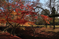 Autumn romance : walking and having a picnic under maple trees. (Go Go Janet) Tags: red fall leaves japan maple fallfoliage    nara graden