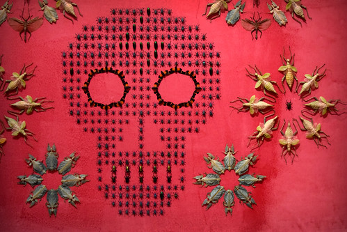 pink color art alex skeleton dc washington nikon gallery day bugs renwick d3300