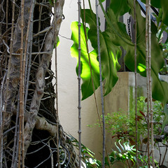 Afternoon Delight (Dom Guillochon) Tags: life light plants sunlight tree nature leaves wall botanical vines afternoon branches delight jungle tropical feuilles plantes