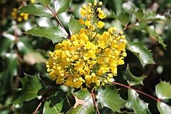 National Arboretum ~ HBW! (karma (Karen)) Tags: flowers plants texture washingtondc dof bokeh brightcolors nationalarboretum 4spring hbw cmwdyellow bokehwednesdays