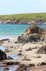 Elephant Seal Beach 3 (SamLleva) Tags: california beach mammal coast sand pacific highway1 seal hearstcastle pup cambria elephantseal molting