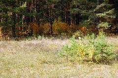 DSC_6017 (Rustam Bikbov) Tags: autumn september 2012    sverdlovskoblast