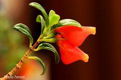 macrophoto (photolenvol) Tags: macro fleur plante macrophoto jardinbotanique