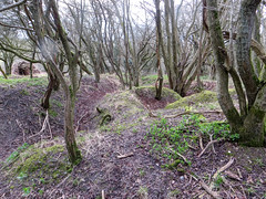 WW1 Troop training trenches (Ali-Berko) Tags: berkhamsted