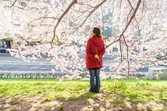 (bgfotologue) Tags: landscape photography photo spring europe czech prague image praha cherryblossom czechrepublic sakura imaging charlesbridge vltava  bohemians   centraleurope   2016      bgphoto  esko  eskrepublika 500px  tumblr  bellphoto