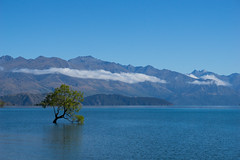 Wanaka Tree (jasonclarkphotography) Tags: newzealand sony wanaka canterburynz a6000 nex5 jasonclarkphotography