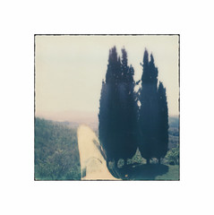 Cypress ~ Pola # 1 A (bruXella & bruXellius) Tags: italien italy film nature analog landscape polaroid sx70 italia tuscany cypress toscana expired paysage cupressus toscane landschaft pola italie toskana zypresse instantfilm cyprs polanoid chiusdino instantmagic polagen impossibleproject px70colorshade colorprotection ilobsterit