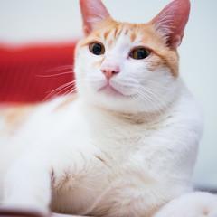 (ChCh Chen) Tags: cats cat 50mm kitten kitty a7