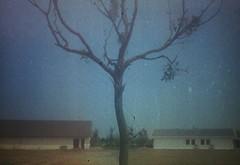 Negative0-28-3A(1) (judy-chen) Tags: film analog 35mm olympus halfframe olympuspen olympuspenee2
