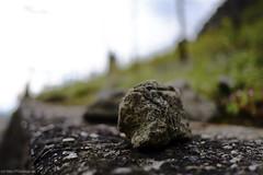 [ 365 | 132 ] (frau_k) Tags: stone 365 132 weinberg ootb rhndorf