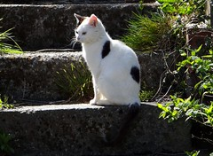 Pussy on the Steps (Snowdrop500) Tags: cats animal cat feline pussy pussycat pussies