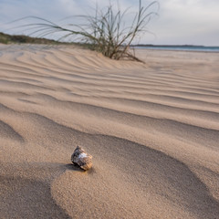 Hermit shell at sunset square crop 2 (--Welby--) Tags: sunset plant beach coast sand crab australia wa kimberley hermit westernaustralia sanddunes broome cablebeach sandune