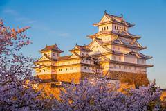 Sunset @ Himeji Castle (Cheng-Yang, Chen) Tags: sunset castle japan  himeji sakura cherryblossoms