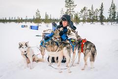 DSC_7685 (Adventurin') Tags: dog sweden stockholm aurora lapland sledding kiruna nothernlights