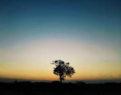 Serenity.. (nshrishikesh) Tags: nature flickr village phone explorer lonetree naturelover phonephotography koovagam vsco honor6 121clicks vscocam