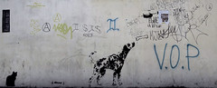 Stencil DalmataLucasCatNatosKroma (La Mala Testa) Tags: streetart street graffiti graffitti graff stencil biobio concepción chile dog perro gato cat dálmata picoypicosa a isis conika holito mjl