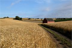 Sommer pur 15.03 (lady_sunshine_photos) Tags: austria europa sommer niedersterreich kornfeld weinviertel getreidefeld erntezeit
