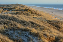 Henne Strand (Frau_Anna) Tags: ocean vacation holiday beach strand denmark sand meer wasser sonnenuntergang view urlaub aussicht dnemark nordsee dnen northsee hennestrand
