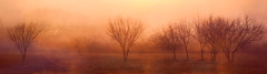 Three paths (flowerweaver) Tags: pink trees orange mist beautiful field fog sunrise landscape gold golden quiet purple quote path earlymorning surreal peaceful calm paths castaneda daarklands