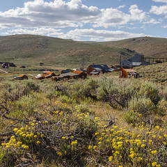 Flowers in Bodie (Jeffrey Sullivan) Tags: california park county copyright usa jeff nature june forest canon landscape mono photo unitedstates state iii historic national wildflowers bodie sullivan sierranevada easternsierra inyo leevining monocounty bodiestatehistoricpark 2013 5dmark