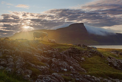 Good morning, Skye! (alexxdarkside) Tags: uk morning light mountains skye fog sunrise point scotland isle sheeps neist