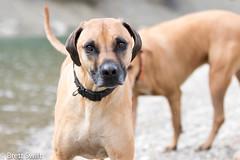 Pensive (brettswift) Tags: dog calgary enzo