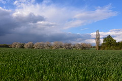 Fidélité (v.heldenbergh) Tags: champs pluie nuage herstal