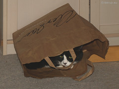 Snow White in the bag (2011) (Finn Frode (DK)) Tags: pet cats animal cat bag play indoor olympus hide cave snowwhite mixedbreed domesticshorthair e400 snehvide