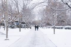 Icy and Snowy Walkways on Campus (aaronrhawkins) Tags: winter snow storm cold college ice students weather campus official aaron lawn walkway slippery pathway hawkins byu brighamyounguniversity