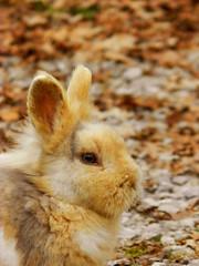Autumnal Rabbit (theSnoopyG - thanks for over 300.000 views!) Tags: autumn wild portrait rabbit bunny leaves autumnleaves autunno ritratto mimicry autumnal coniglio coniglietto autunnale coniglionano autumnleafcolour conigliodomestico