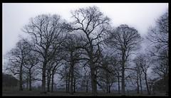 Freezing Trees (cofarrell25) Tags: ireland sky dublin plant color tree nature digital canon landscape photography eos rebel photo raw colours outdoor january freezing serene xsi ƒ56