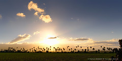 Fin de journée (stef974run) Tags: belair tropical flamboyant phare cocotier vanille bommert sucrier canneàsucre hazier gousse vanilleraie