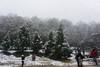 Chipinque (ricardogz10) Tags: snow méxico forest mexico san nieve nevada pedro bosque garcia pino monterrey chipinque garza garcía