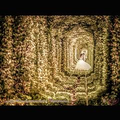 #Photographer : Supoj Mun สื่อรักโดย#vivacehouse #ช่างภาพงานแต่ง#ช่างภาพถ่ายพรีเวดดิ้ง#ช่างภาพถ่ายงานพิธีวันจริง#ช่างภาพฟรีแลนซ์ถ่ายภาพนิ่ง#preweddingphotographer#weddingphoto#weddingceremonyphotography#marriagephotography #weddingphoto #รับถ่ายภาพนิ่งงาน