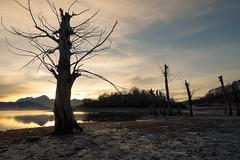 Lago di Campotosto, the Golden Morning breaks through (jimmomo) Tags: trees lake mountains alberi sunrise italia montagna abruzzo campotosto laghi