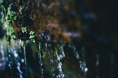DSC04409 (Benjamin Ling Photography) Tags: plants nature water rock gardens digital forest 35mm lens photography moss bokeh sony botanic canberra algae portra fee whacking preset t15 samyang a7s