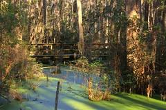 IMG_7380 (SweetMeow) Tags: forest shadows southcarolina boardwalk marsh conservancy hiltonheadplantation whoopingcranepondconservancy