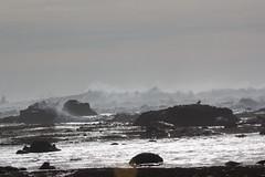 IMG_7431 (armadil) Tags: beach waves surfer wave beaches surfers mavericks bigwaves californiabeaches