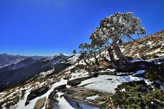 合歡山北峰~雪之玉山圓柏~ 新年快樂 Snowed Single-seed Juniper (Shang-fu Dai) Tags: sky landscape nikon taiwan 圓柏 formosa 台灣 雪 天空 雪景 d800 合歡山 hehuan 1635mm 合歡北峰 玉山圓柏 singleseedjuniper 3422m