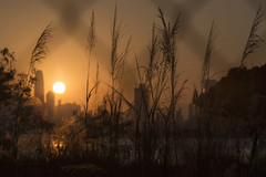 Seeing though in the Grass (Job Homeless) Tags: autumn sunset building grass hongkong sadness countryside moody victoriaharbor ef70200mmf28lusm canon6d