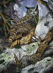 Owl Watercolor (Bengal Thrush) Tags: color tree bird art rock pine watercolor painting moss eyes paint beak feathers feather canvas owl lichen