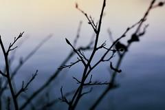 blue (.:sean fitzgerald:.) Tags: blue sunset nature minolta dusk superia veins x700