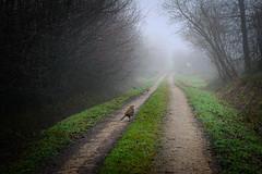 (vieubab) Tags: nature branches hiver arbres extrieur oiseau chemin fort bois brume calme feuillage atmosphre branchage luminosit
