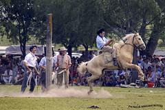 Jineteada 2_1 (pniselba) Tags: horse criollo caballo buenosaires gaucho tradicion provinciadebuenosaires sanantoniodeareco areco jineteada diadelatradicion
