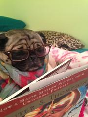 A dog that enjoys reading (patco4444) Tags: pictures dog pet pets dogs animal animals fun photography funny photos lol joke humor humour entertainment jokes lmao lmfao photoset entertaining lolz