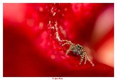 Red romance [ Saltique] (Lutecia88) Tags: saltique ambiancecolore